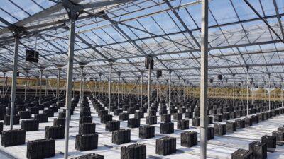 Bästa aerotemprar tll växthus, testat