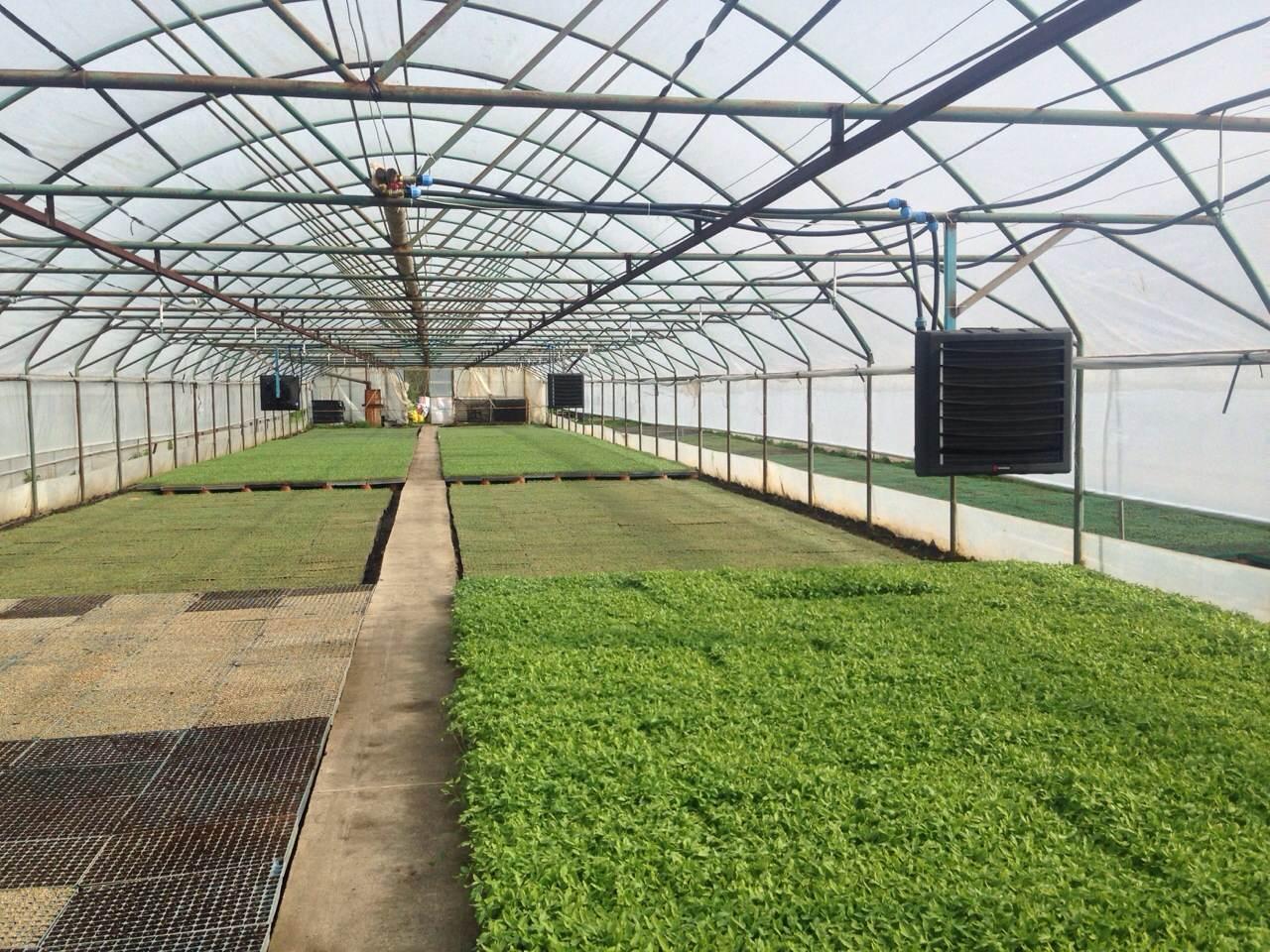 Fläktluftvärmare i växthus